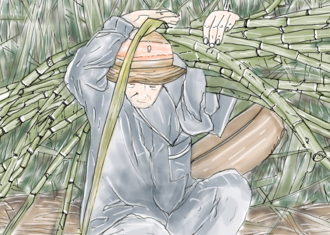 Bianca Galimberti - Person who collects in bamboo in a forest. (Sketch)